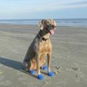 """Обувь для собак """"PAWZ"""" каучуковая"""